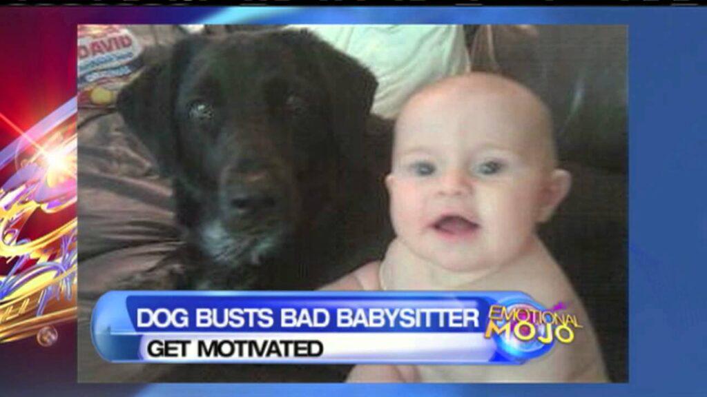 Cane che ha salvato una bambina