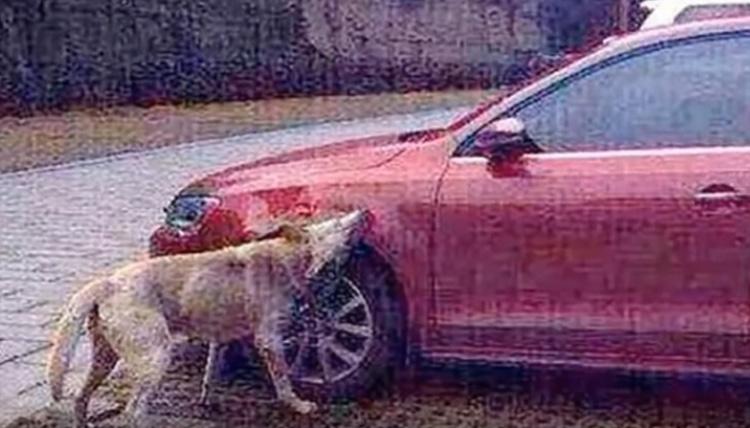 Cane che morde una macchina