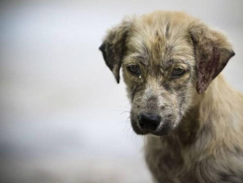 Cani randagi salvano una bambina abbandonata in un tombino