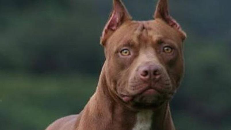 Annabel, il cane abbandonato con uno strano biglietto al collo