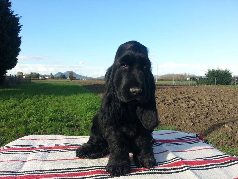 Firenze: cane ustionato per fare un dispetto al suo coinquilino