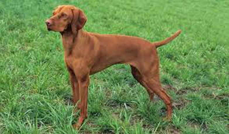 Fragolina, il cane abbandonato 4 volte che si è lasciato andare