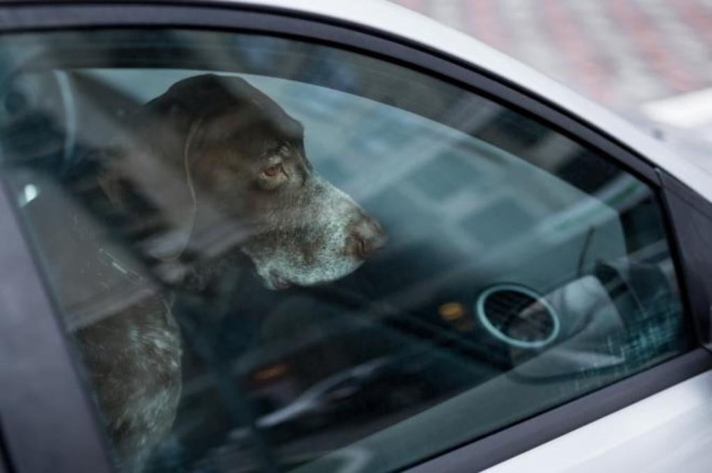 Solaro: cane rinchiuso dentro un'auto sotto il sole salvato dai Vigili