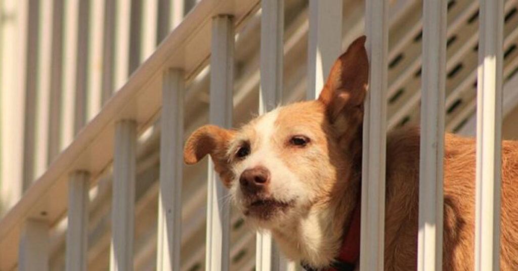 Cane chiuso in balcone