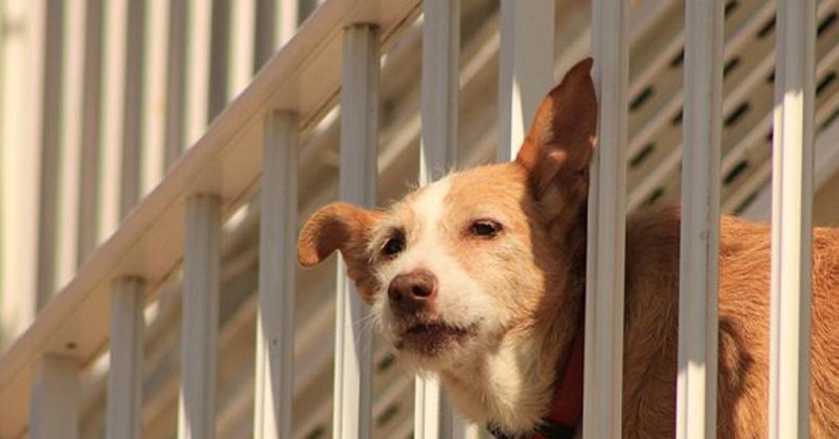cucciolo di cane sempre al balcone