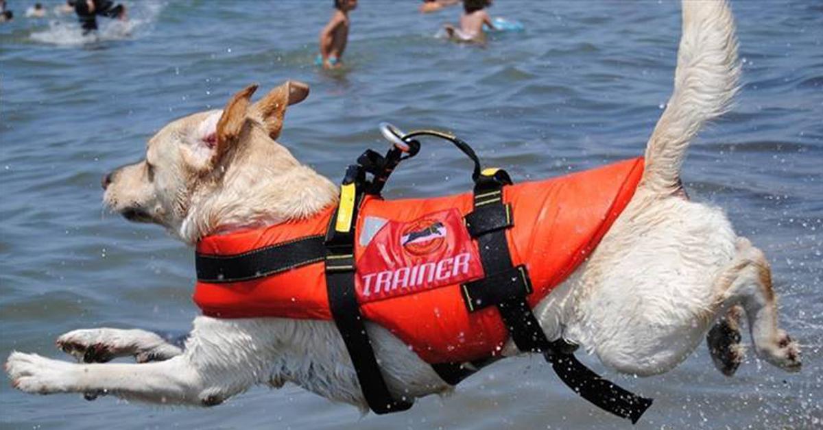 i cani da salvataggio provano angoscia