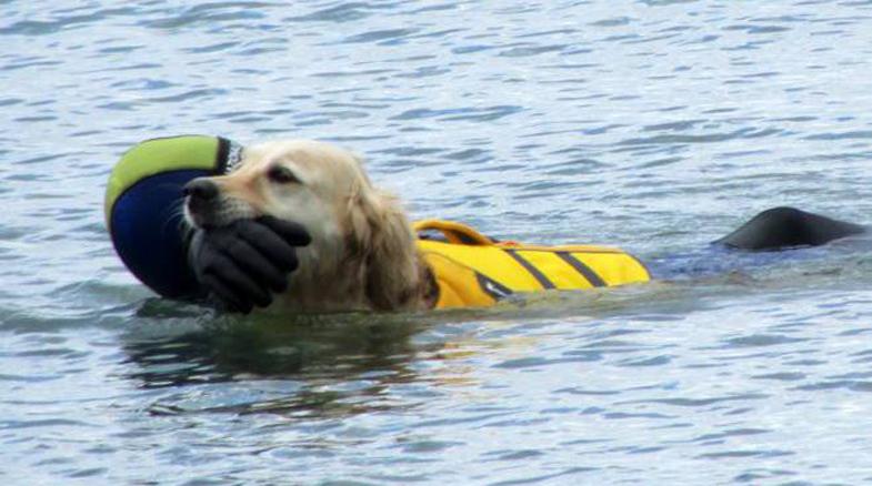 Cane da soccorso si getta in acqua