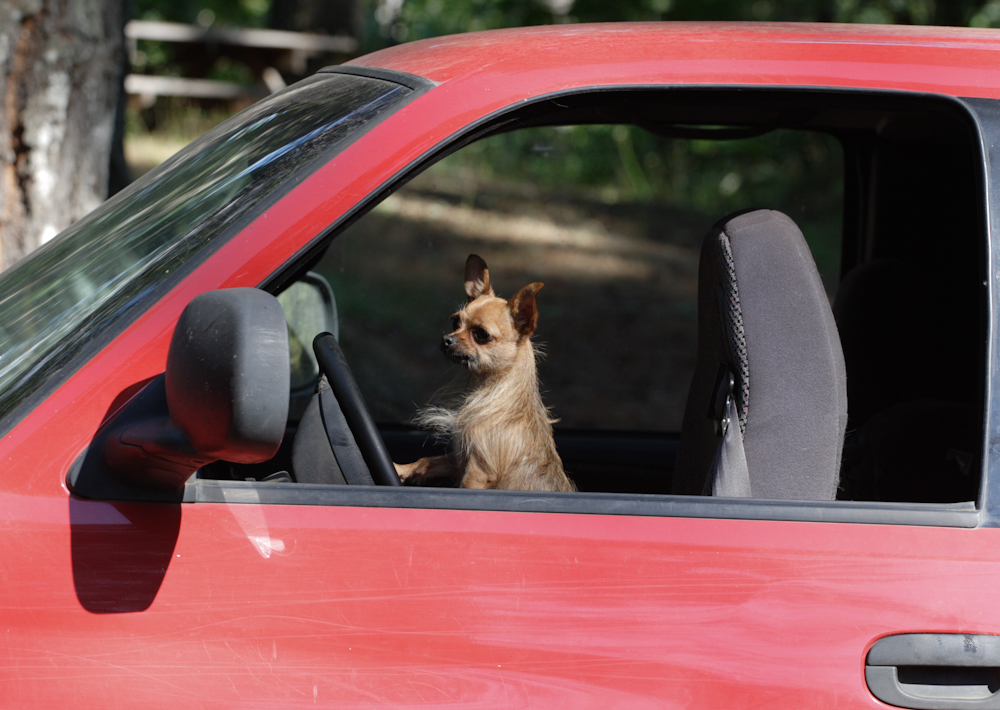 Genova: cane dimenticato in auto, i soccorsi non arrivano in tempo