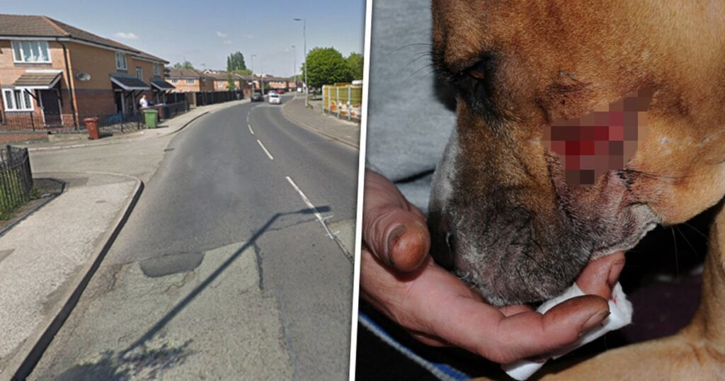 Zena, il cane che ha tentato di sventare una rapina per salvare i suoi cuccioli
