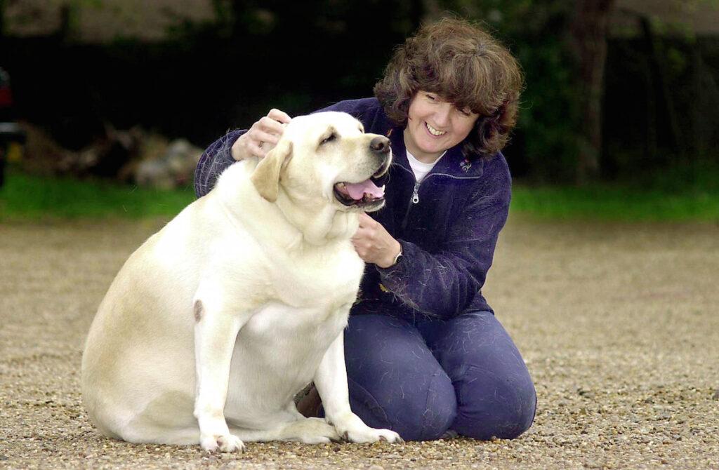 I cani obesi sono più irritabili: parola di scienza