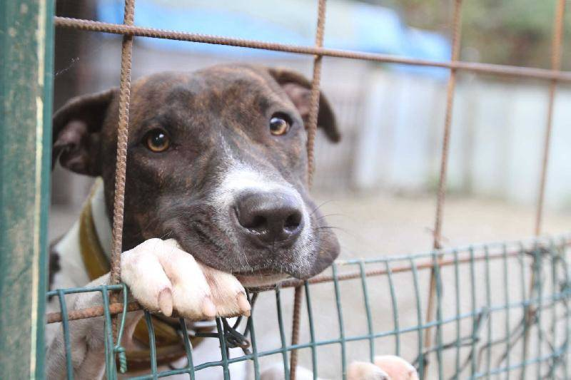 Bari, cane intrappolato in una buca d'olio: salvato da 4 ragazzi