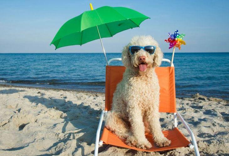 Puglia: in arrivo importanti limitazioni all'ingresso dei cani in spiaggia