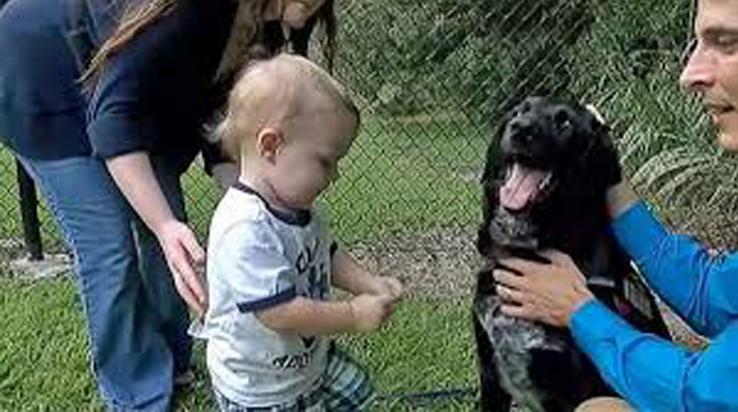 Cane insieme ad una bambina