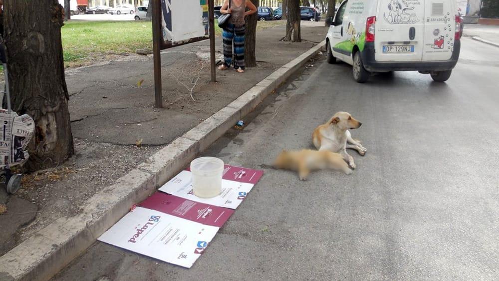 Cane investito con altro cane accanto