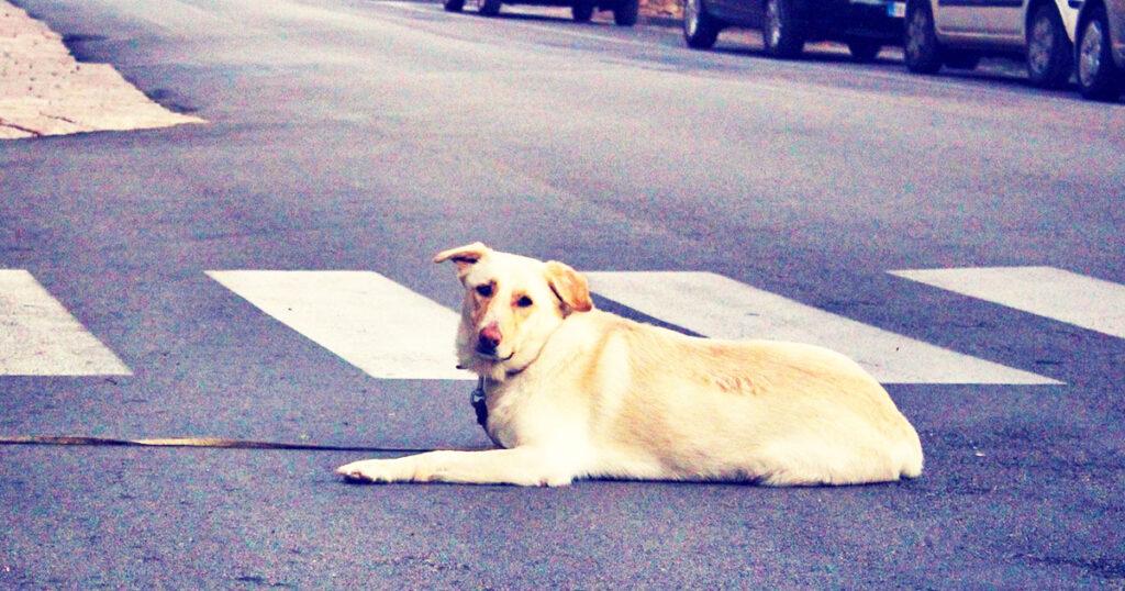 Irpinia: 6 cani perdono la vita per colpa delle esche avvelenate in una sola notte