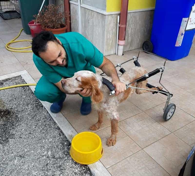 Melody: il cane abbandonato dopo una paralisi che ora sogna una nuova vita