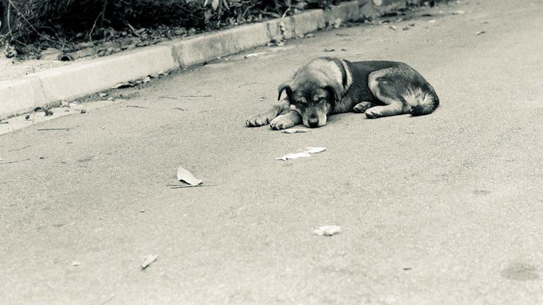 San Girolamo (BA): cane ritrovato senza vita, è allarme bocconi avvelenati