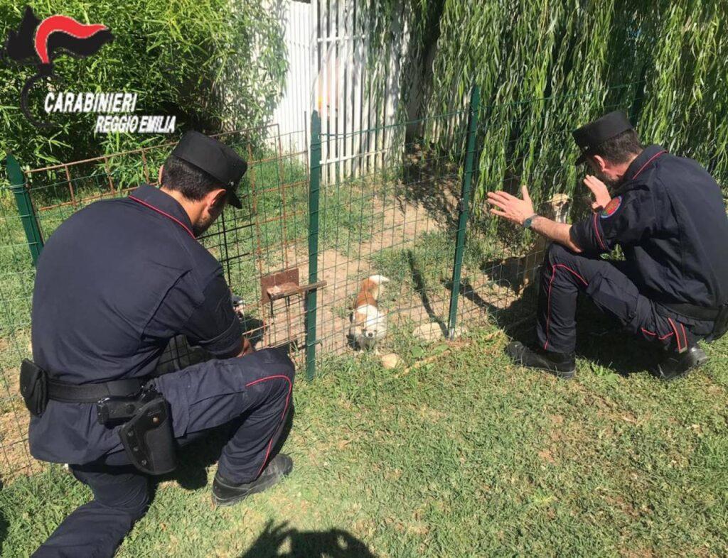 Cane salvato da un carabiniere