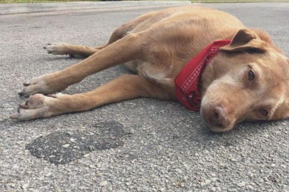Pavia: cane veglia per due giorni la proprietaria priva di vita