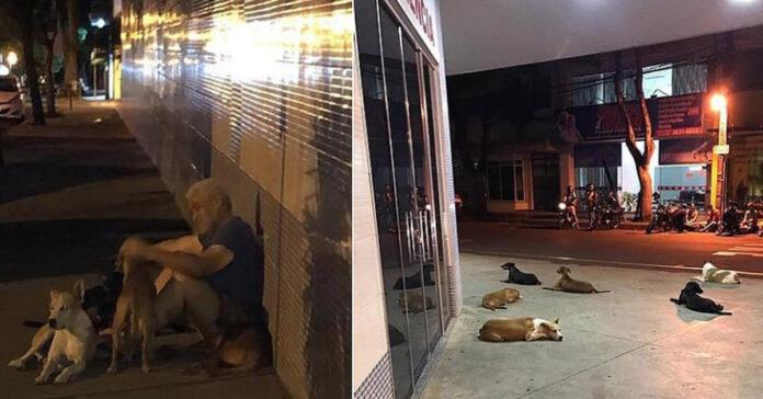 Cani che aspettano il proprietario fuori da un ospedale
