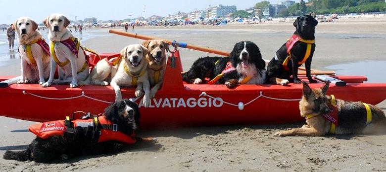Cani da soccorso in spiaggia