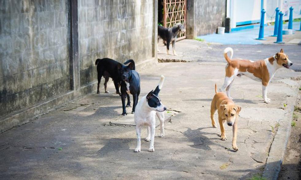 I cani di un senzatetto che hanno atteso il loro proprietario fuori dall'ospedale