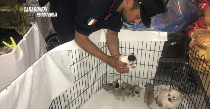Cani sequestrati da un carabiniere