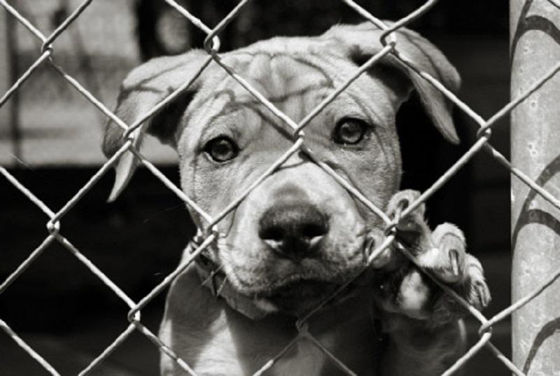 """Cora, la cagnolina adottata e lasciata al canile perché """"troppo brutta"""""""