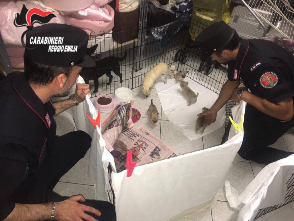 Cuccioli di cane salvati da un carabiniere