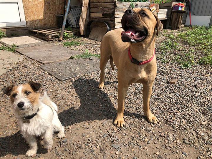 Due cani amici