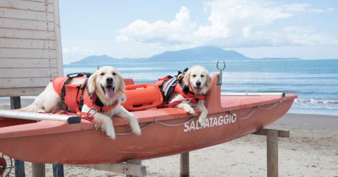 Due cani da salvataggio