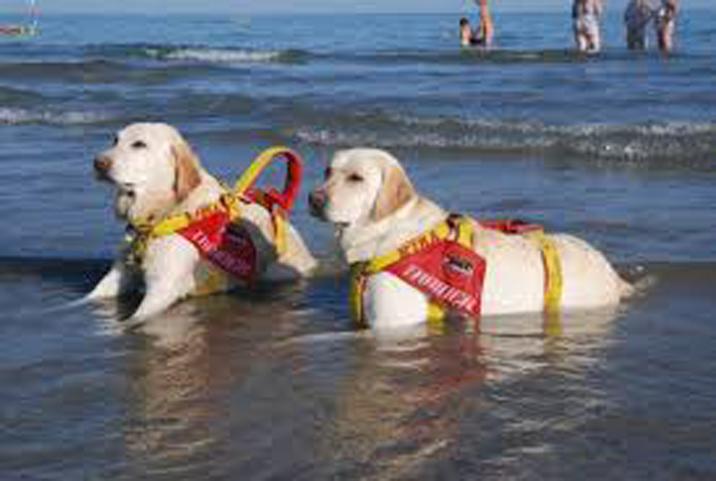 Due cani da soccorso in acqua