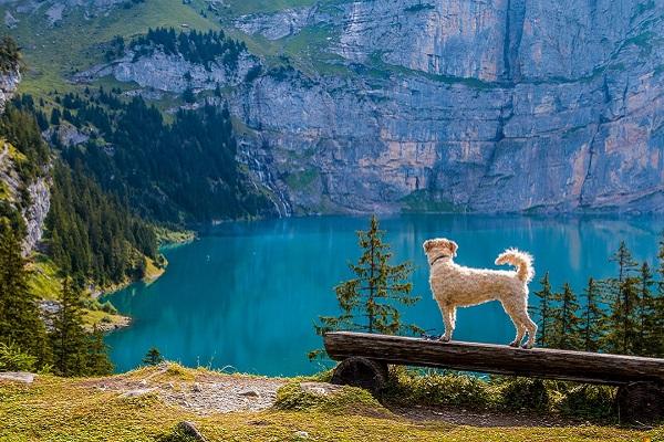 cane guarda il panorama