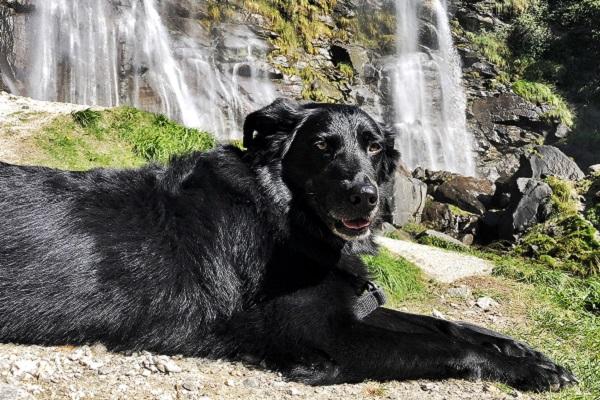 cane nero e cascate