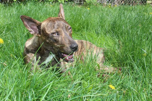 cane che mangia erba