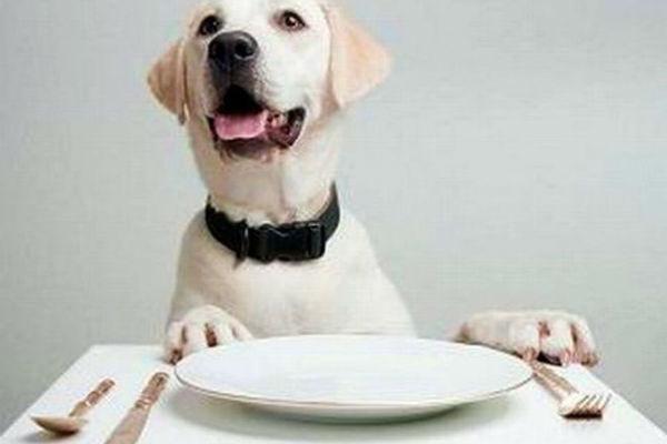 Il cane è affamato o finge? Ecco come scoprirlo