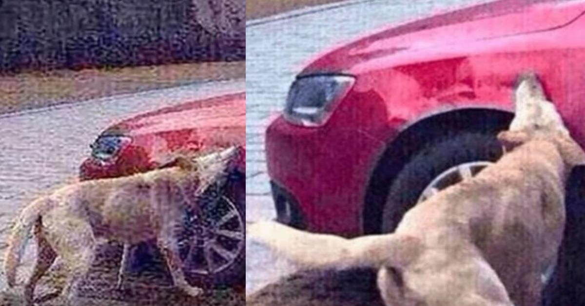 La vendetta di un cane