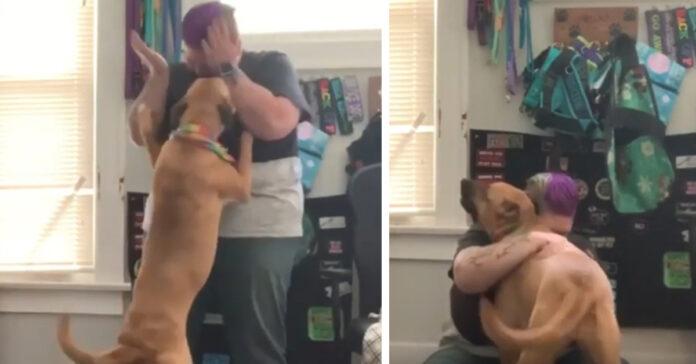 Luna il cane che aiuta la proprietaria contro gli attacchi di panico
