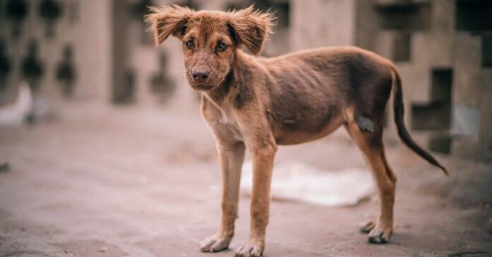 Piccolo cane randagio