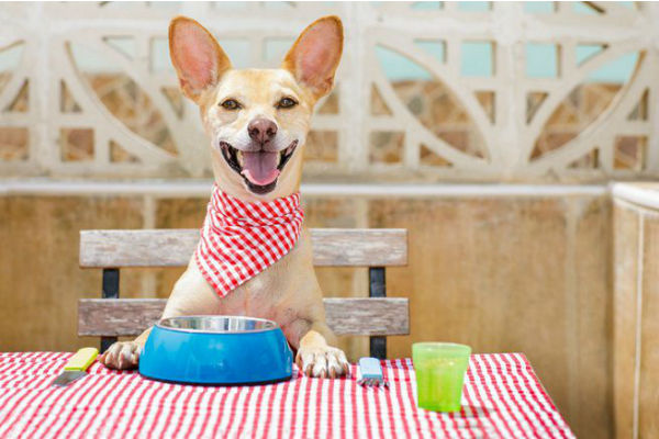 Pasticcio di salmone e spinaci per cane: la ricetta