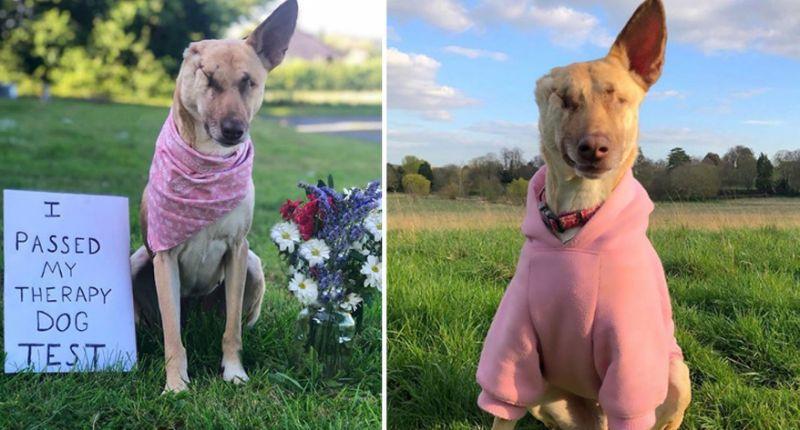 Storia del cane Maggie