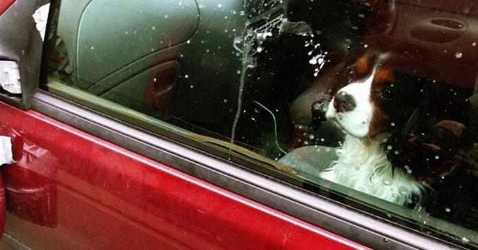 Un cane chiuso in auto