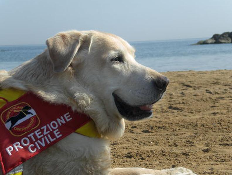 Un cane da soccorso in spiaggia