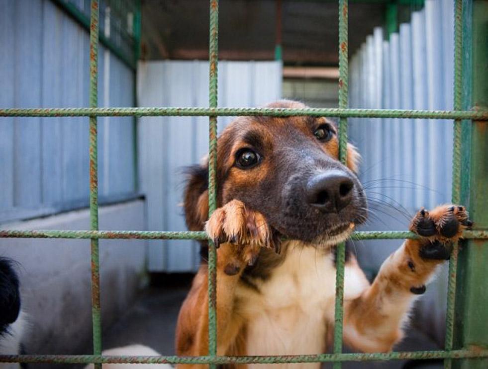 Trapani: cani spariti dal canile, risolto il mistero