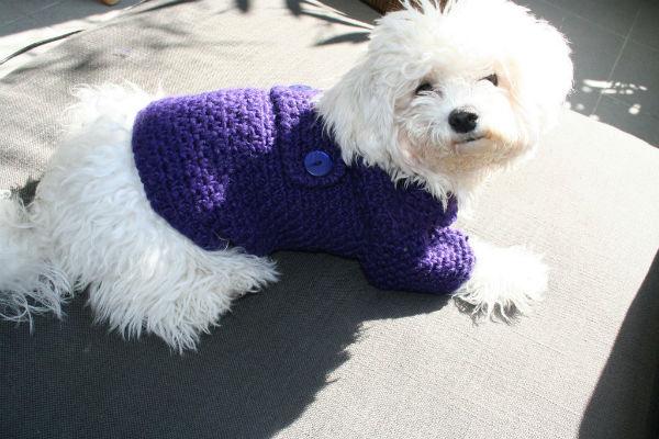 Ai cani serve il maglione in inverno?