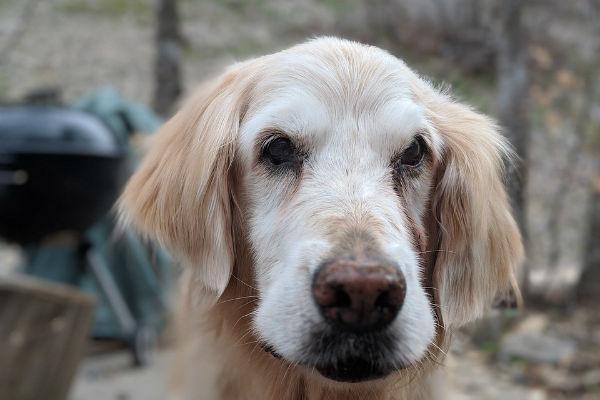 Anestetici per il cane: cosa sono e come aiutano Fido