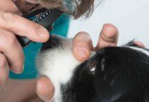 lacerazione della cornea nel cane