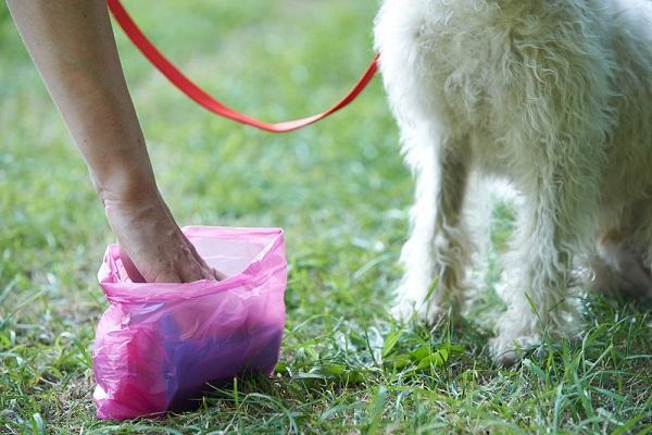 paletta e sacchetto per cani