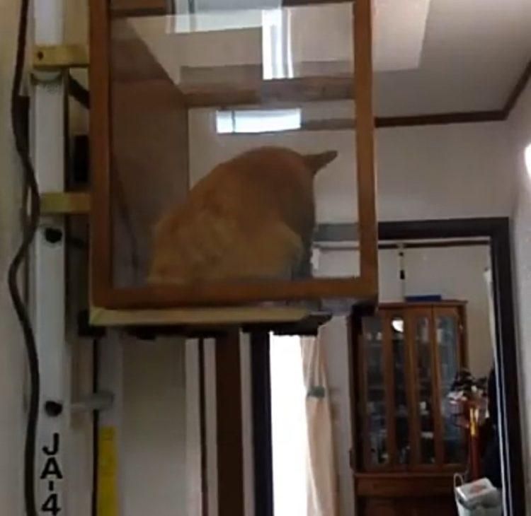 Cucciolo ha difficoltà nel salire le scale ma il proprietario ha la soluzione