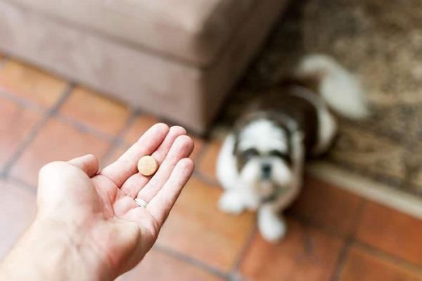 dare farmaco al cane